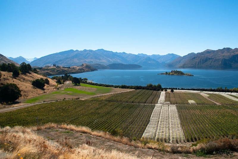 Lake Wanaka and Rippon Vineyard, Central Otago South Island Road Trip