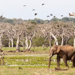 Sri Lanka Safari Yala National Park
