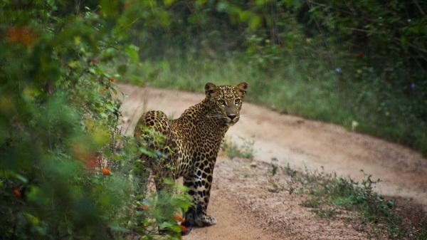 Yala-National-Park-Safari-Sri-Lanka