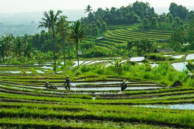 Bali-Rice-Field-Best-Resort-Destinations
