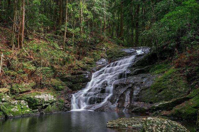 Kondalilla-Falls-Sunshine-Coast-Hinterland
