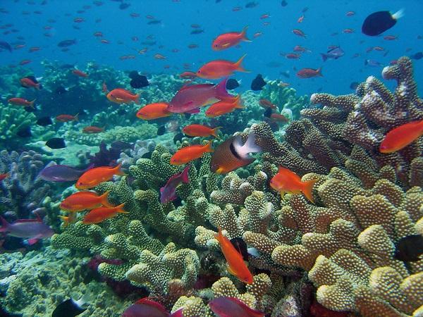 Rainbow-Reef-Best-Snorkelling-Spots-Fiji