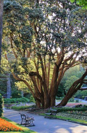 9 of the Best Picnic Spots in Wellington