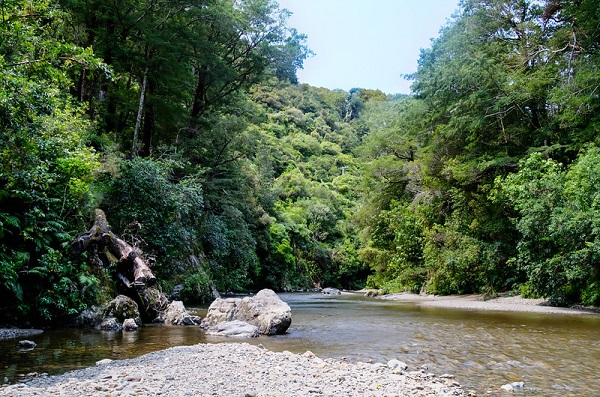 Kaitoke-Regional-Park-Wellington-Picnic-Spots-Lord-of-the-Rings