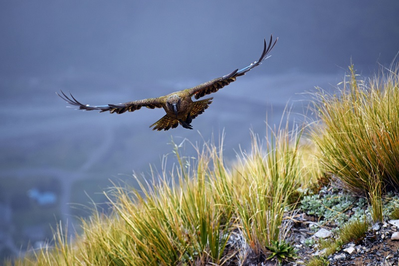 New-Zealand-Arthurs-Pass-National-Park