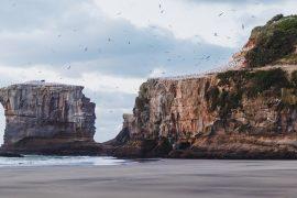 Muriwai Beach NZ